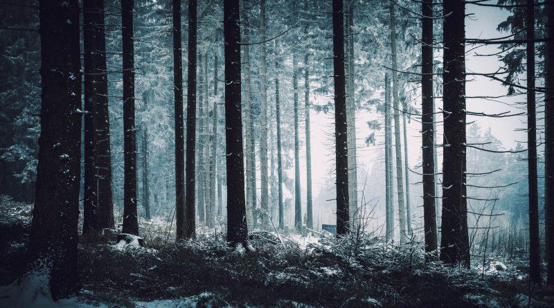 Ką siutina mūsų miškininkai?
